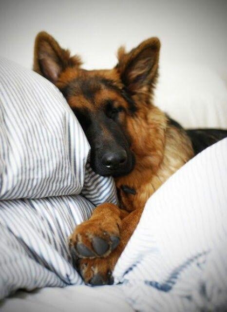 a902a84895bc4e82ca835dde7cc6bed5---beds-doggies.jpg
