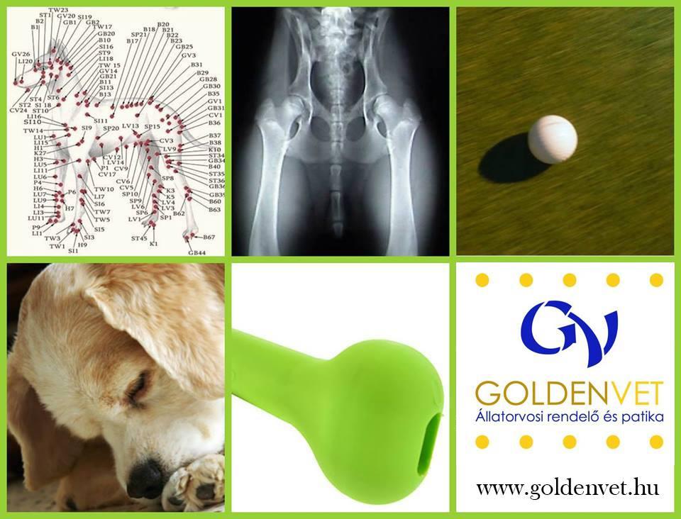 10 tévhit (eloszlatása) az aranygolyó beültetéről + 1 valós hátrány