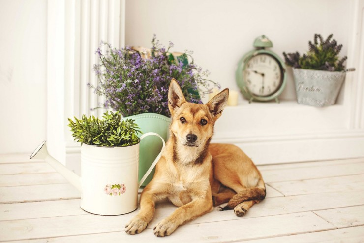 eight-common-household-herbs-and-spices-that-are-safe-for-dogs-55c0b85d31442.jpg