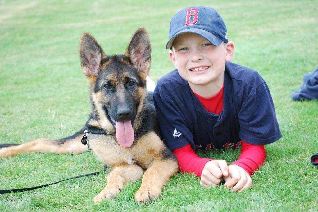 Harcikutya vagy öleb? A kutyaidentitás-váltás korszaka