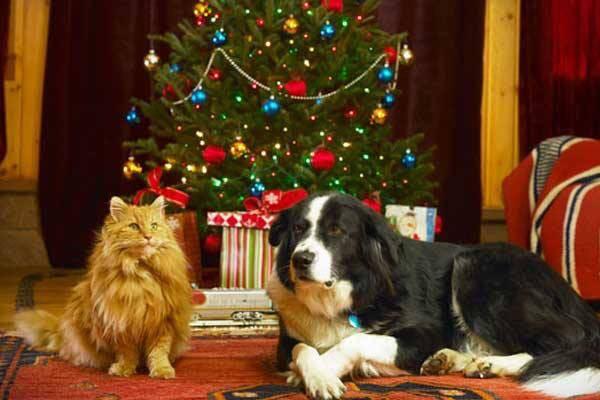 Mire figyeljünk Karácsonykor ha négylábú van a családban?