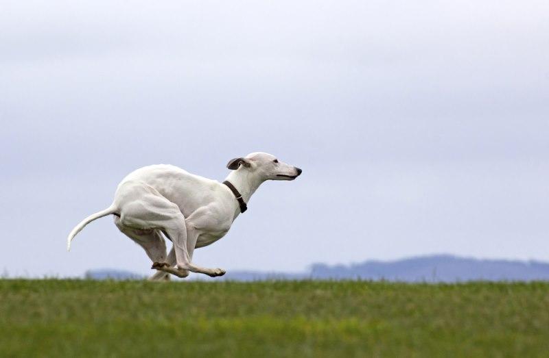 A kutya, aki nyusziugrásban futott