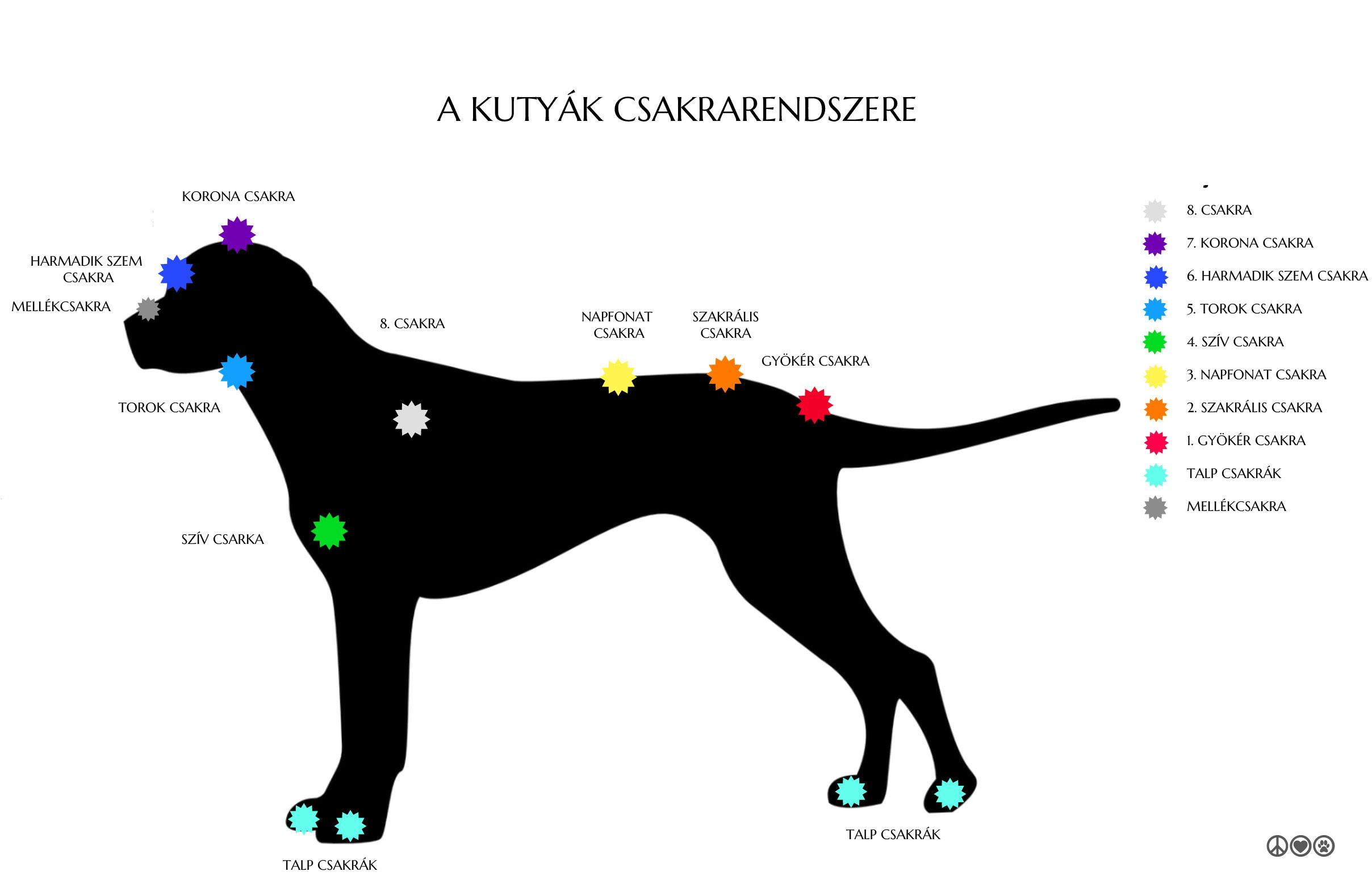 kutyak-csakra-rendszere.jpg