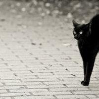 Térugrás és fekete macska
