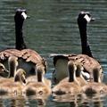 Csak a mesékben létezik tökéletes család?