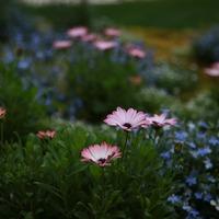 Mi köze egy kertésznek a szülőséghez?
