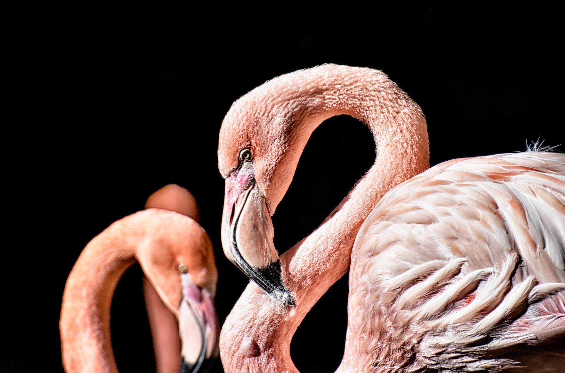 flamingo-3743094_1920.jpg