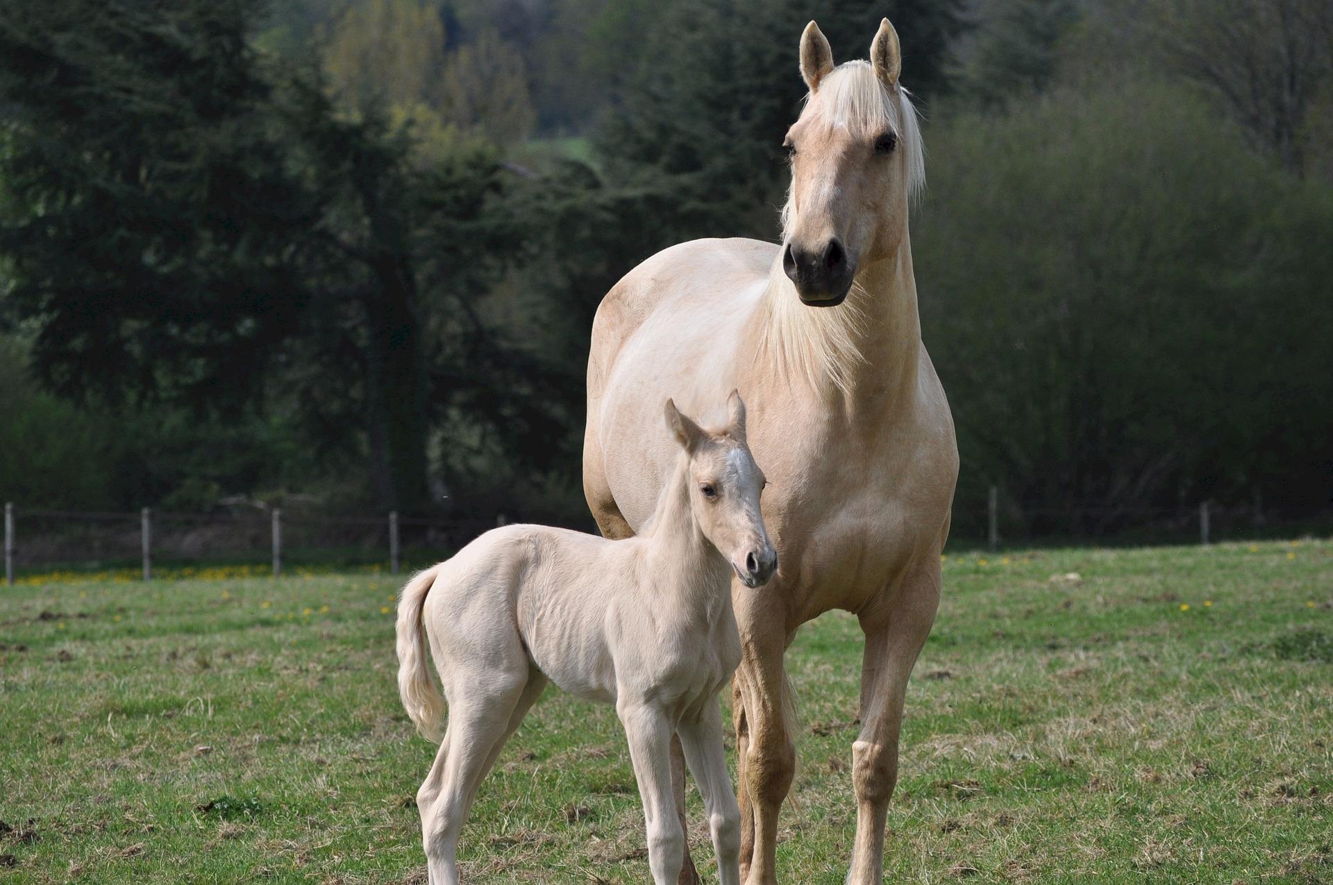 horses-743905_1920.jpg