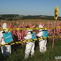 Románia is betiltja a GM-kukoricát