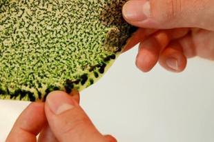 Új fejezet jön a Föld életében - A szintetikus levél