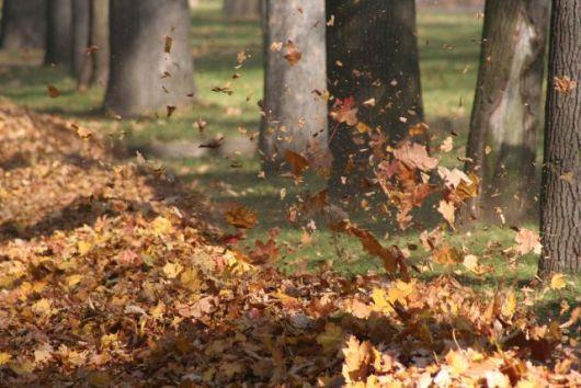 Autumn_wind_1_1.jpg