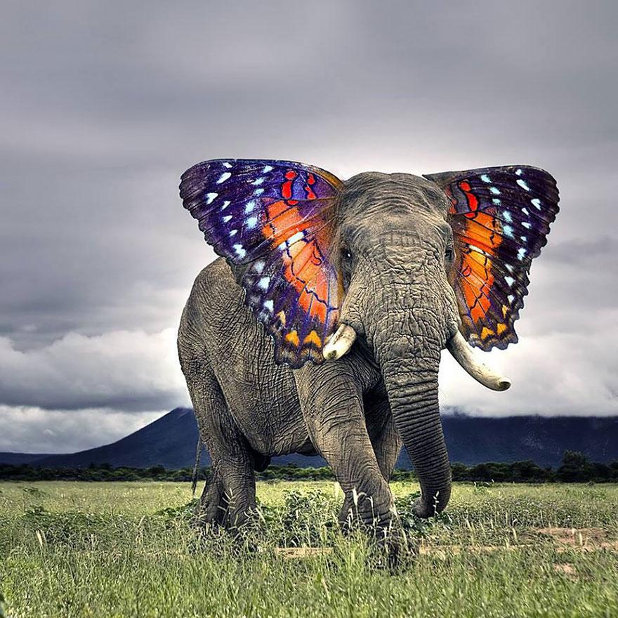 animal-hybrids-19.jpg