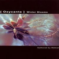 Oxycanta - Winter Blooms