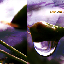 Az ambient 2010-ben (TOP 15)
