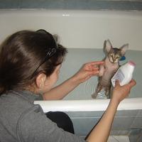 Esti  fürdőzés