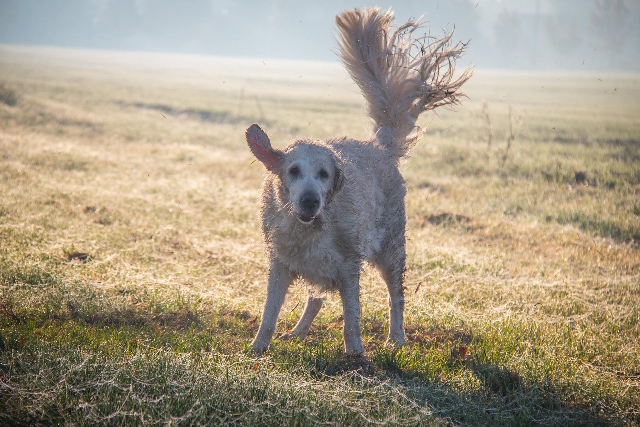 Ezért kerüld messziről a xilit-es termékeket, ha kutyatulajdonos vagy