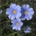 Virágos május...