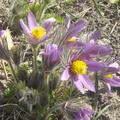 Minden tavasz új meleget ígér...
