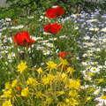 Júniusi virágözön...