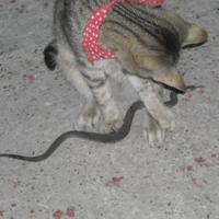 A cicák és a kígyó...