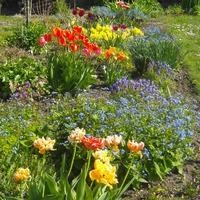 Virágzás áprilisban...