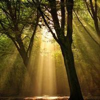 A széllel beszélik meg ők az örök életet...