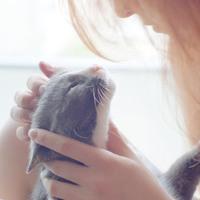 A macska hetedik érzéke...