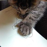 Egy cica hétköznapjai....