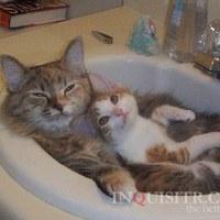....szerintetek szeretnek a cicák fürdeni??????