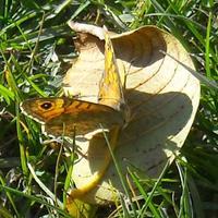 Képek az őszi napsütésben...
