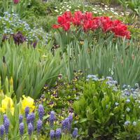 Tavaszi virágok...
