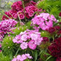 Virágok május végén...