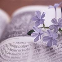 Elhull a virág, eliramlik az élet...