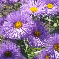 Egy virág története, aminek igazán még a nevét sem tudom...