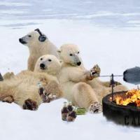 Mai modern medvék...