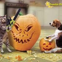 A cicák és a Halloween....