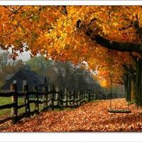 Nézd csak a tájat,de szépen őszül....