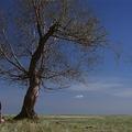 TOPLISTA - A 25 legjobb western Alec Cawthorne szerint (5. rész)