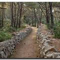 Erdő lesz a Cséry-telepen
