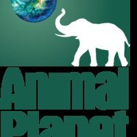 Magyar-nyelvű 'Animal Planet
