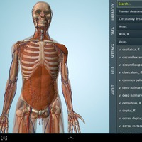 3D test anatómia!