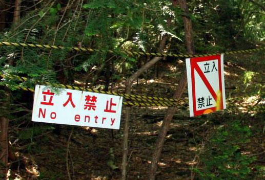 Aokigahara.jpg