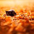 15 cuki kép, amin állatok élvezik az őszt