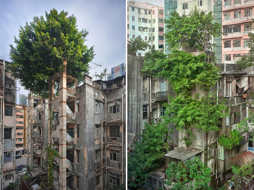 tree_winning.jpg