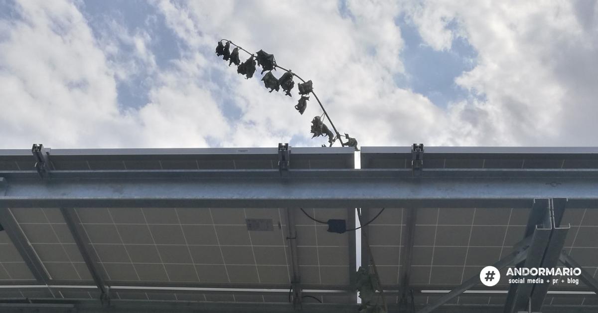 A magyar abszurd vége: végre kivágták az utolsó fát is a napelemek alól