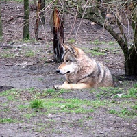 Farkasmagány