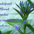Húsvét u. 4.