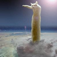 Androidon készül majd el a világ leghosszabb macskája