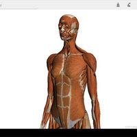 Google Body -  a mamutvállalat a bőröd alá mászik