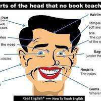 Parts of the head (vocabulary)
